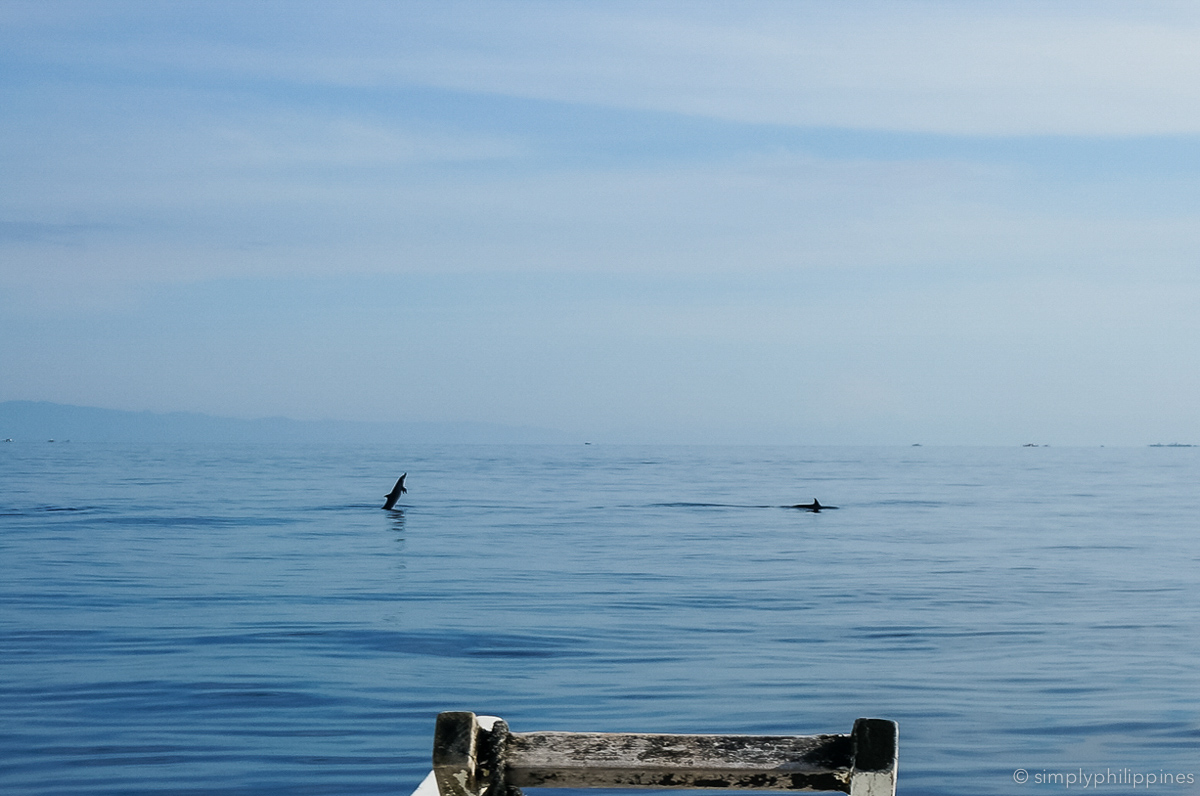 dolphin-watching-bohol