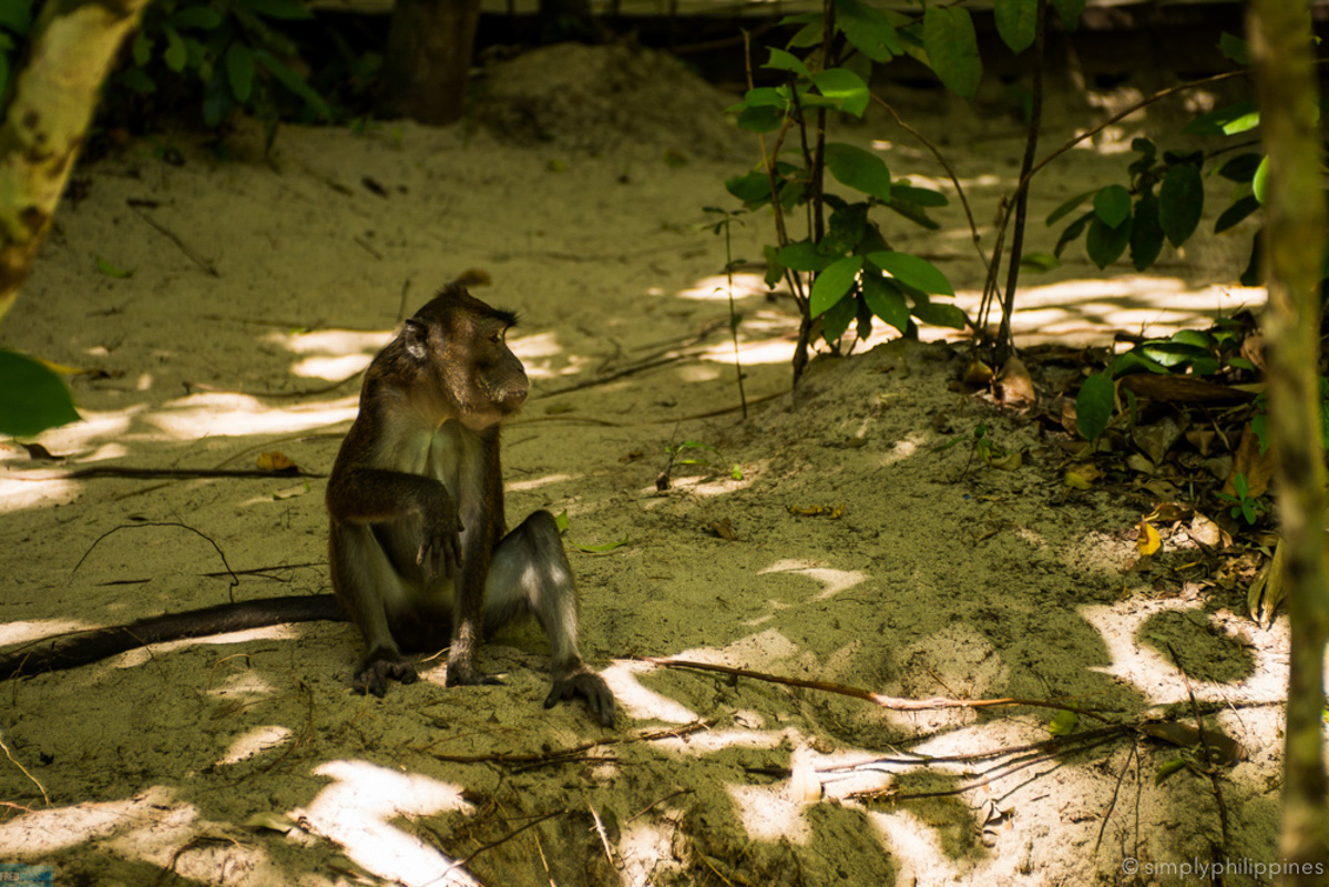 Watch out for monkeys while you wait for your tour. They can be feisty.